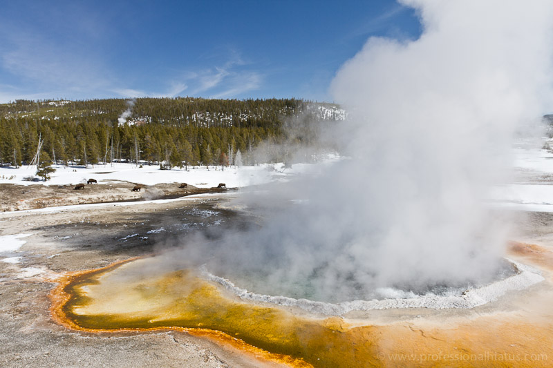 Top 5 Things To Do Around Yellowstone In Winter