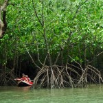 Canoeing through mangroove forests of Phang Nga Bay