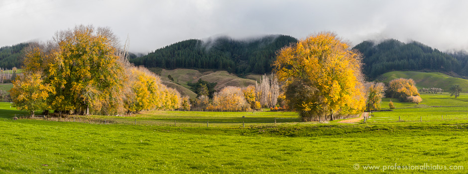 new-zealand-yellow-trees-pano-ph