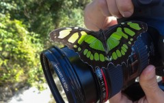 Butterfly on Canon camera